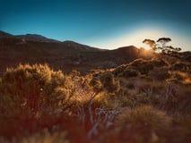 Sceniska ställen i Tasmanien Arkivfoto