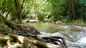 sceniska strömmar för natur 4K av vattenfall stock video