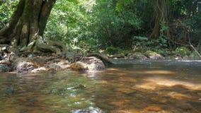 sceniska strömmar för natur 4K av vattenfall lager videofilmer