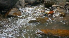 sceniska strömmar för natur 4K av vattenfall arkivfilmer