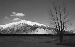 Sceniskt berg och träd Royaltyfri Fotografi