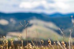 Sceniskt berglandskap som skjutas nära Hoverla Carpathian Ukraina Royaltyfri Fotografi