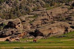 Sceniskt betar nära bergen arkivfoto