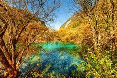 Sceniskt damm med crystal vatten för smaragd bland färgrika nedgångträn royaltyfria foton