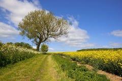 Sceniskt engelskt bridleway fotografering för bildbyråer