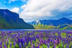 Sceniskt landskap av fjordar i Norge arkivfoton