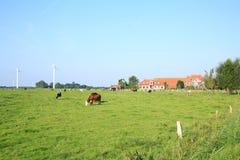 Sceniskt landskap i Wangerland, Friesland, lägre Sachsen, Tyskland royaltyfri bild