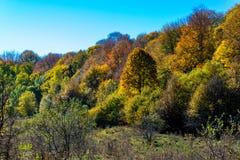 Sceniskt landskap med träd i bergskog i höst arkivbild