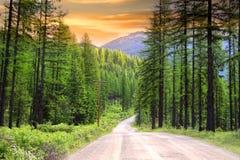 Sceniskt lantligt drev i Montana Arkivfoton