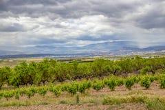 Sceniskt mulet jordbruks- landskap med vingården i Navarre, Spanien, ruttTorres del Rio de Janeiro-Viana arkivfoton