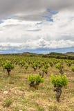 Sceniskt mulet landskap med vingårdar i La Rioja, Spanien nära Logrono fotografering för bildbyråer