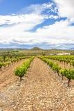 Sceniskt mulet landskap med vingårdar i La Rioja, Spanien nära Logrono royaltyfria bilder