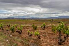 Sceniskt mulet landskap med vingårdar i La Rioja, Spanien, rutt Ventosa-Najera royaltyfri foto