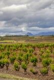Sceniskt mulet landskap med vingårdar i Navarre, Spanien, ruttTorres del Rio de Janeiro-Viana royaltyfria foton