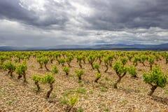 Sceniskt mulet landskap med vingårdar i Navarre, Spanien, ruttTorres del Rio de Janeiro-Viana royaltyfri fotografi