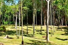 Sceniskt palmträdfält i parkera Fotografering för Bildbyråer