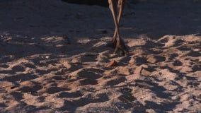 Sceniskt sköt länge av seagulls lager videofilmer