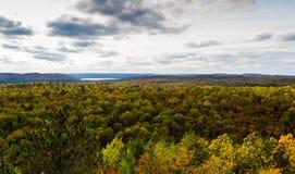 Sceniskt skoglandskap i en nedgång Royaltyfri Fotografi