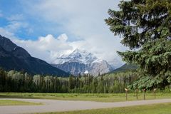 Sceniskt snömaximum av det Robson berget och pinjeskogen i sommaren royaltyfri bild