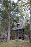 sceniskt trä för kabinskog Royaltyfri Foto