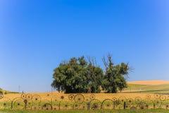 Sceniskt träd arkivbild