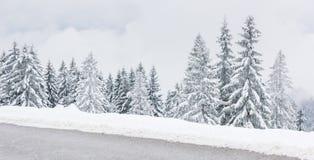 Sceniskt vinterlandskap med klädda träd för snö royaltyfri fotografi
