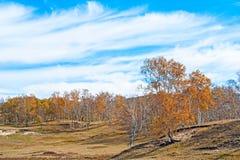 Scenry in autumn Stock Photos
