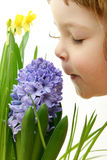 Scent Of Spring Stock Images