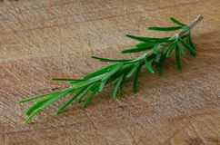 A SCENT OF ROSEMARY 02 royalty free stock photography