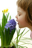 Scent of spring Royalty Free Stock Images