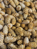 Scented pine cones. Texture of pine cones perfuming Royalty Free Stock Photography