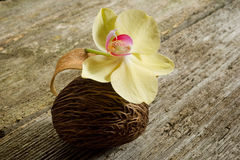 Scented potpourri. With orchid on wood background royalty free stock photo