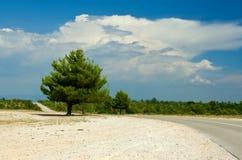 sceny drogowy drzewo Zdjęcie Stock