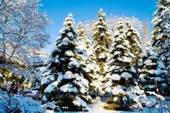 sceny lasowa zima Zdjęcia Stock