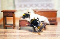 Sceny od życia bumblebee rodzina Zdjęcie Stock