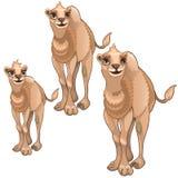 Sceny rosnąć brown wielbłąda Wektorowi zwierzęta Fotografia Stock