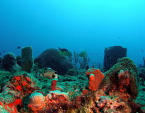sceny underwater Zdjęcia Royalty Free