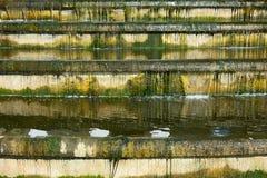 Sceny wody kaskada przerastająca z algami Fotografia Stock
