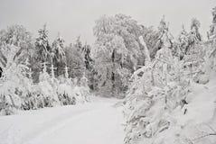 sceny zima Zdjęcia Royalty Free