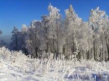 sceny zima Obrazy Royalty Free