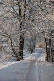 sceny zima Zdjęcia Stock