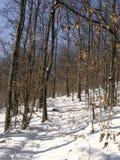 sceny zimowe Zdjęcie Royalty Free