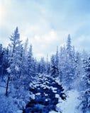 sceny zimowe Zdjęcia Stock