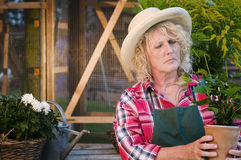 Sceptical look of gardener. Torso view of a middle-aged, gardeners-clothing in the garden skeptically examined a potted plant Royalty Free Stock Images