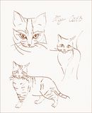 Scetchs of cat. Freehand sketchs of domestic cats Stock Photography