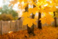Schöne bunte Herbstszene mit Effekt von bokeh, von Ahornblättern, von weißem altem Zaun und von Fallfarben in Finnland stockbilder