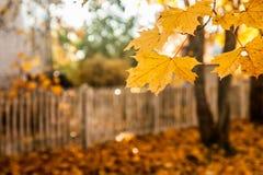 Schöne bunte Herbstszene mit Effekt von bokeh, von Ahornblättern, von weißem altem Zaun und von Fallfarben in Finnland lizenzfreies stockfoto