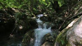 Schöne Natur mit den Bergwhitewater-Flussstromschnellen, die den üppigen grünen Wald durchfließen und über das moosige fallen stock video footage