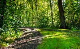Schöner Wald mit dem hellen Sonnenschein, der durch die Bäume scheint Schotterstraße durch sonniges Grün stockfotografie