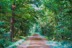 Schöner Wald mit dem hellen Sonnenschein, der durch die Bäume scheint Schotterstraße durch sonniges Grün stockfoto